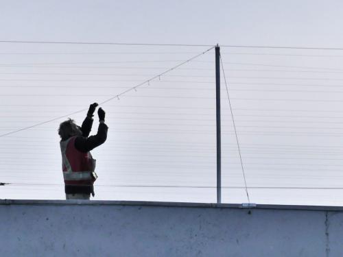 Roof net to deter nesting gulls