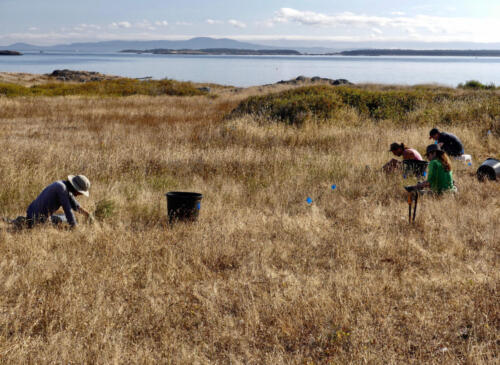 Restoring the maritime meadow