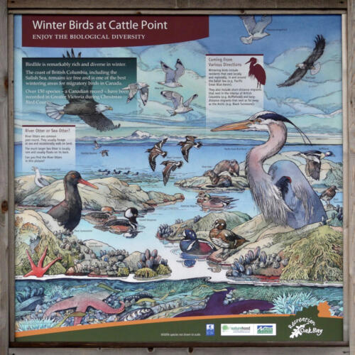 Winter Birds at Cattle Point.