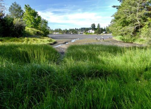 Tidal marsh and mudflat