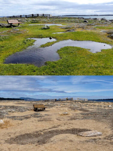 Seasonally wet and dry maritime meadow and vernal pools