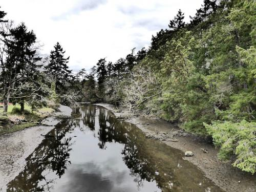 Lower Colquitz River